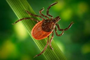 Клещевой вирусный энцефалит и его профилактика