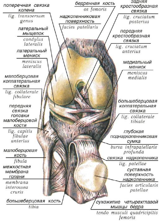 Верхние суставы ноги крымские санатории для лечения суставов