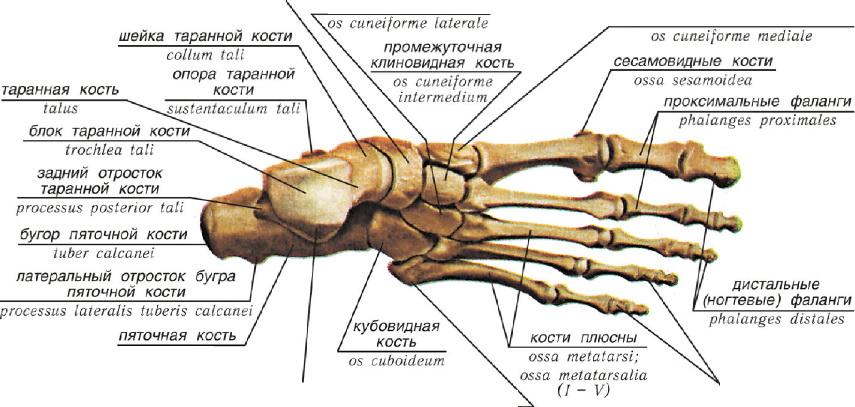 обои средний палец