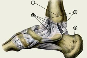 Формы суставов анатомия реабилитация после 2 - х месяцев пластики коленного сустава