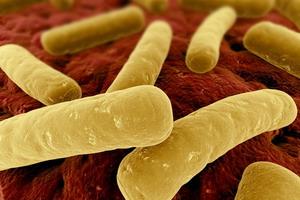 Симптомы и лечение псевдомембранозного энтероколита и колита