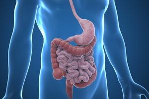 Брюшной тиф: симптомы, профилактика и лечение