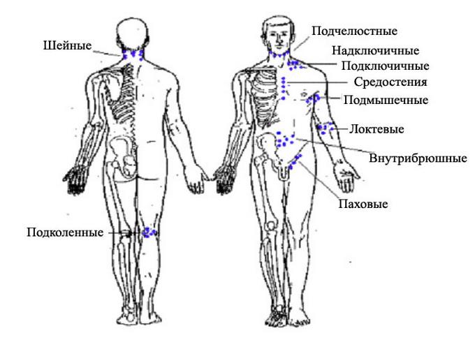 Лимфатические узлы на теле и