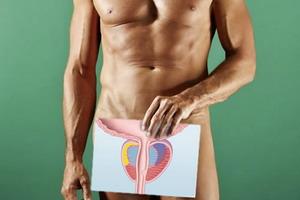 Анатомия и расположение предстательной железы у мужчины