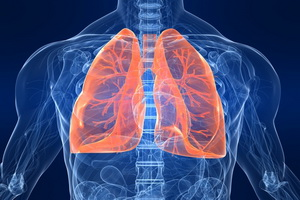 Анатомия и расположение легких и бронхов у человека