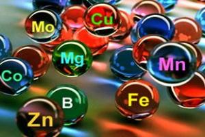 Роль минеральных веществ в организме человека