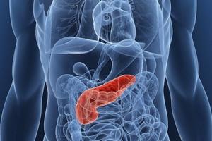 Поджелудочная железа и её расположение в организме человека