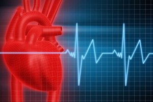 Из чего состоит и как работает сердечно-сосудистая система человека