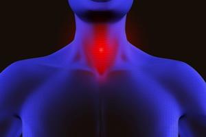 Анатомия человека: строение горла