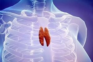 Тимус (вилочковая железа): функции, болезни и их лечение