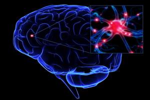 Нервная система человека: общее строение и регуляция