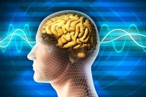 Периферическая нервная система человека: строение и функции