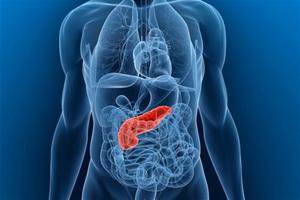 Гормоны поджелудочной железы инсулин и глюкагон
