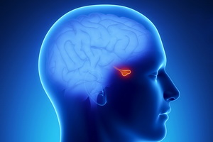 Нарушения функции поджелудочной железы: гипофункция и гиперфункция