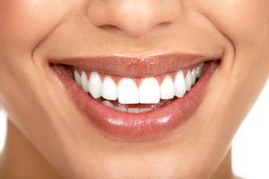 Анатомия полости рта: строение и функции зубов