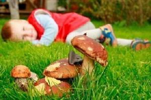 Отравление ядовитыми грибами: симптомы и первая помощь
