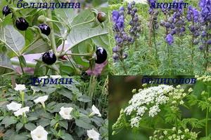 Отравления ядовитыми растениями: симптомы и первая помощь