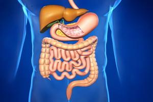 Пищеварительная система человека: строение, функции и значение