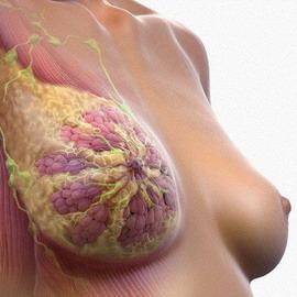 Как вылечить рак в домашних условиях народными средствами?