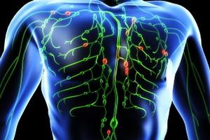 Патология лимфообращения: виды и симптомы нарушений