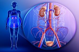 Патологии мочевыделительной системы: основные заболевания
