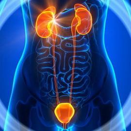 Какие бывают заболевания мочевыделительной системы: виды, этиология патологии, симптомы болезней мочевыделительной системы