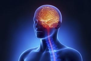 Общая патология нервной системы человека