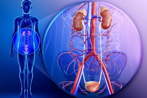 Заболевания органов мочеполовой системы и народная медицина для их лечения