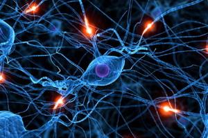 Нейроциркуляторная дистония: симптомы и лечение
