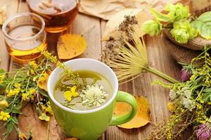 Основы фитотерапии и лучшие травы для лечения заболеваний